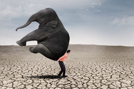 picture of male-domination  - Businessman lifting big elephant on dry ground  - JPG