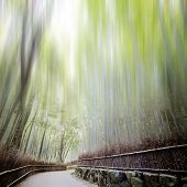 Bamboo forest with a road