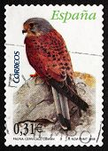Postage Stamp Spain 2008 Common Kestrel, Bird Of Prey