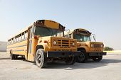 Two Yellow School Buses