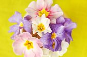 picture of heartwarming  - spring flowers - JPG