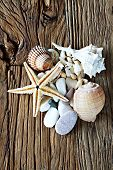 Sea Shell, Sea Stone And Starfish Collection Collection On A Wooden Table