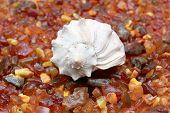 amber and seashell