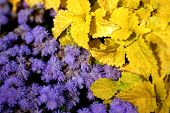 Purple flowers and yellow leaves