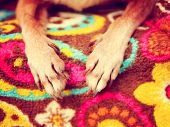 cute chihuahua paws on a paisley blanket  toned with a retro vintage instagram filter