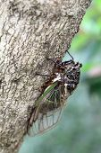cicada holding on a tree