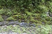 Green Stone Wall