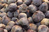 stock photo of rutabaga  - A group of closeup of dark purple radish - JPG