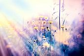 Soft focus on yellow meadow flowers and grass
