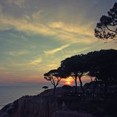 Seascape With Silhouettes Of Pines And Dramatic Sunset