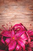Pink Flowers Lilia