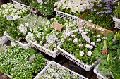 Variety Of White Flowers In Flower Shop