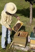 Beekeeper From Germany
