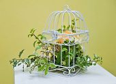 Decoration of bright orange and green colorful flower in white cage. wedding decoration with cage