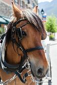Horse On A Bridle In A Small Town