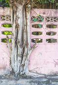 Big Tree Growing On Colorful Pink Wall