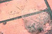 Skeletal Fibers Leaves On Red Brick Block.