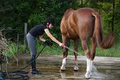 Woman Bathing Horse With Water From Hose