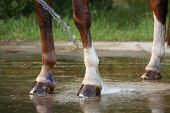 Horse Legs Being Washed With Water From Hose