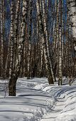 stock photo of birchwood  - Footpath trodden in snow in a snow - JPG