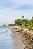 Seawall And Palm Tree On Beach