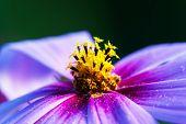 Macro Of The Flower