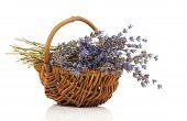 Dry Lavender Flower In A Basket