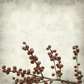 picture of winterberry  - textured old paper background with winterberry branches - JPG