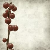 foto of winterberry  - textured old paper background with branches of winterberry - JPG