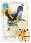 Stamp printed in USSR Russia shows a bird Ciconia boyciana wit
