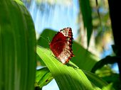 a butterfly resting on a green leaf of orchid