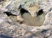 Dinosaur Foot Print