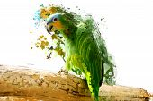 image of parrots  - Green parrot on the branch - JPG