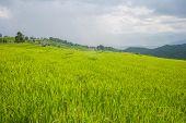 Beautiful Green Rice Field Terrace With Rain Cloud And Mountain.