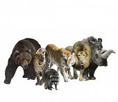 Digital Painting Of Wild Mammals Isolated On White Background