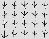 trace of birds