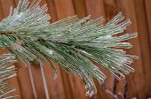 stock photo of freezing  - Twigs of tree encased in ice after a freezing rain storm - JPG