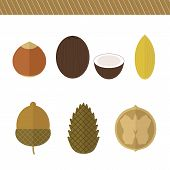 Set Of Nuts. Vector Elements For Design
