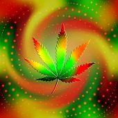 The leaf of hemp
