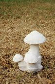 Mushroom Sculpture On Dry Turf 2