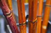 image of chafing  - bundle of bamboo sticks dry - JPG