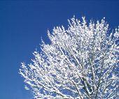 WinterWhite5