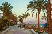 picture of sea-scape  - Palm trees and footway in tropical garden on Red sea coast - JPG