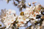 Frühjahr blühen 02
