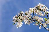 Frühjahr blühen 03