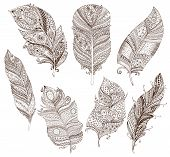 pic of feathers  - Artistically drawn - JPG