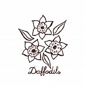 picture of daffodils  - Hand sketched bouquet of daffodils - JPG