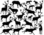 foto of caribou  - Set of eps8 editable vector silhouettes of reindeer or caribou standing - JPG