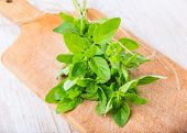 foto of oregano  - Fresh oregano on the kitchen board - JPG