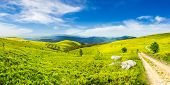 foto of conifers  - composite image of panoramic mountain landscape - JPG